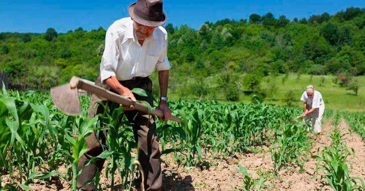 Imagem sobre Trabalho rural remoto exercido antes de 1991 pode ser computado para aposentadoria híbrida por idade